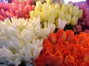jaki kolor kwiatów